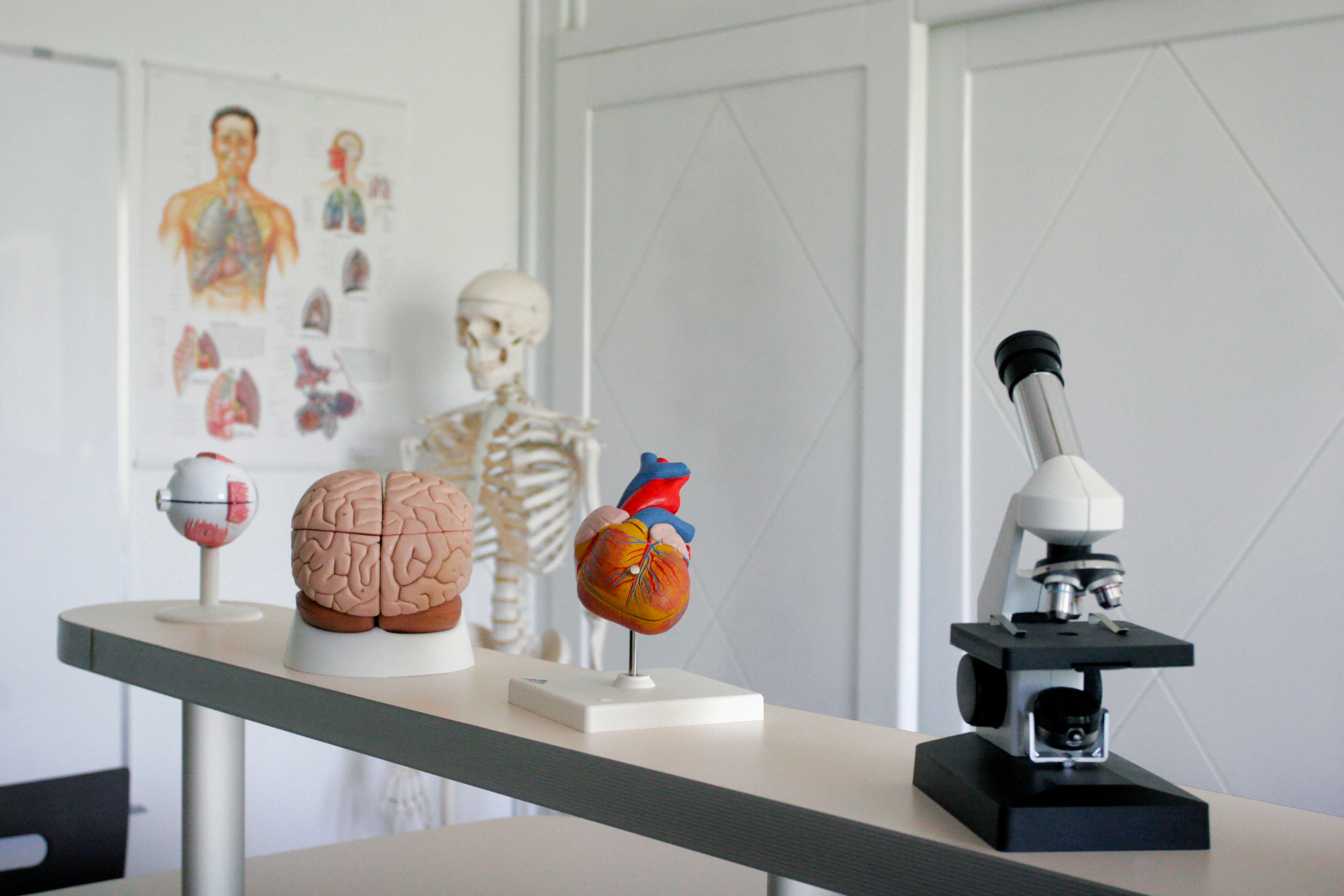 biology classroom with a microscope and synthetic human brain and heart