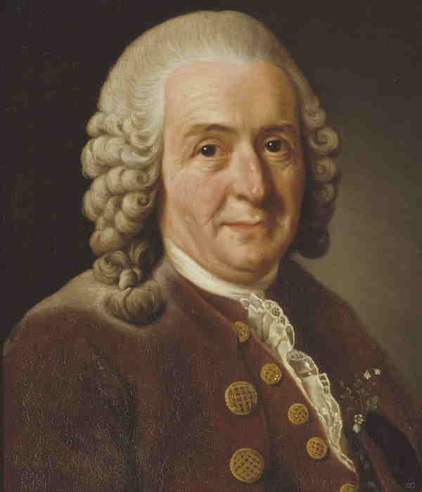Portrait of Linnaeus