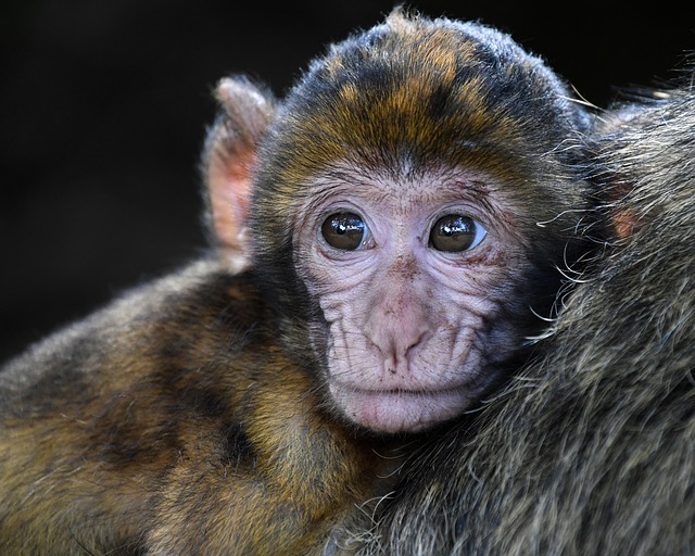 Close-up of a young monkey