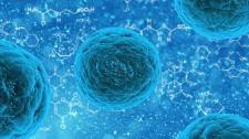 Blue human stem cell