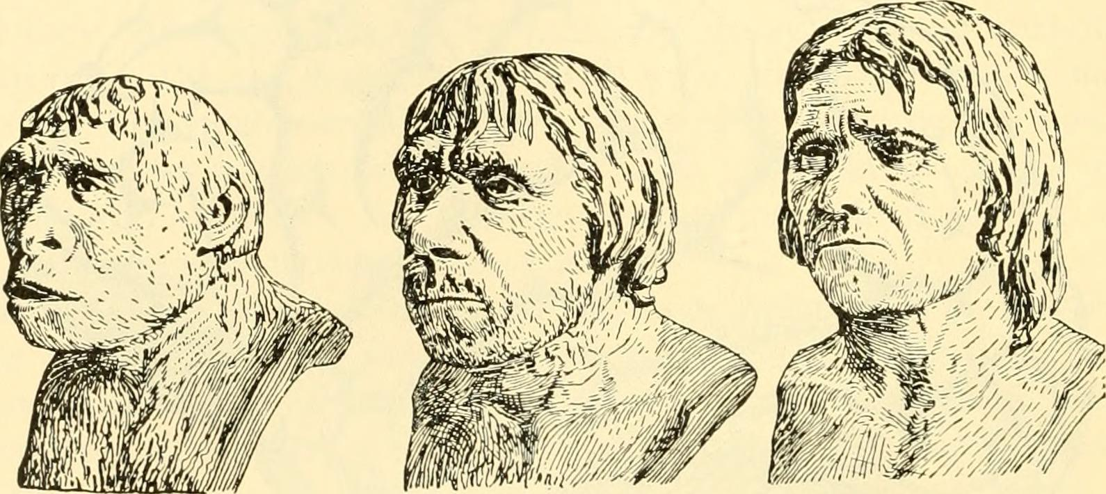 Three stages of human evolution, looking more like a modern man from left to right. Pencil drawings on a tan background