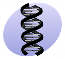 Illustrated image of double helix