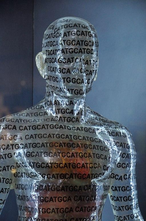 Close up of a transparent human model displayed in the Human Genome - Emerging Technologies Gallery - Science Exploration Hall in Kolkata. The model has repeating letters ATCG written in black.