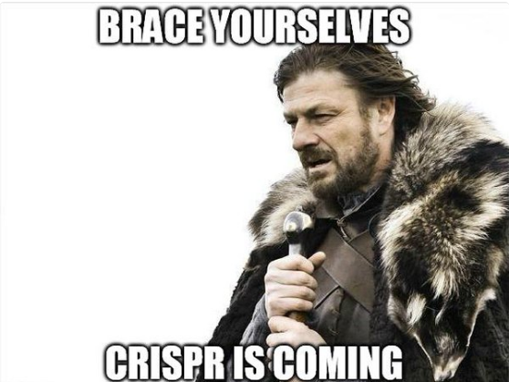 "Meme from Lord of the Rings of a warrior with the text ""BRACE YOURSELVES, CRISPR IS COMING"""