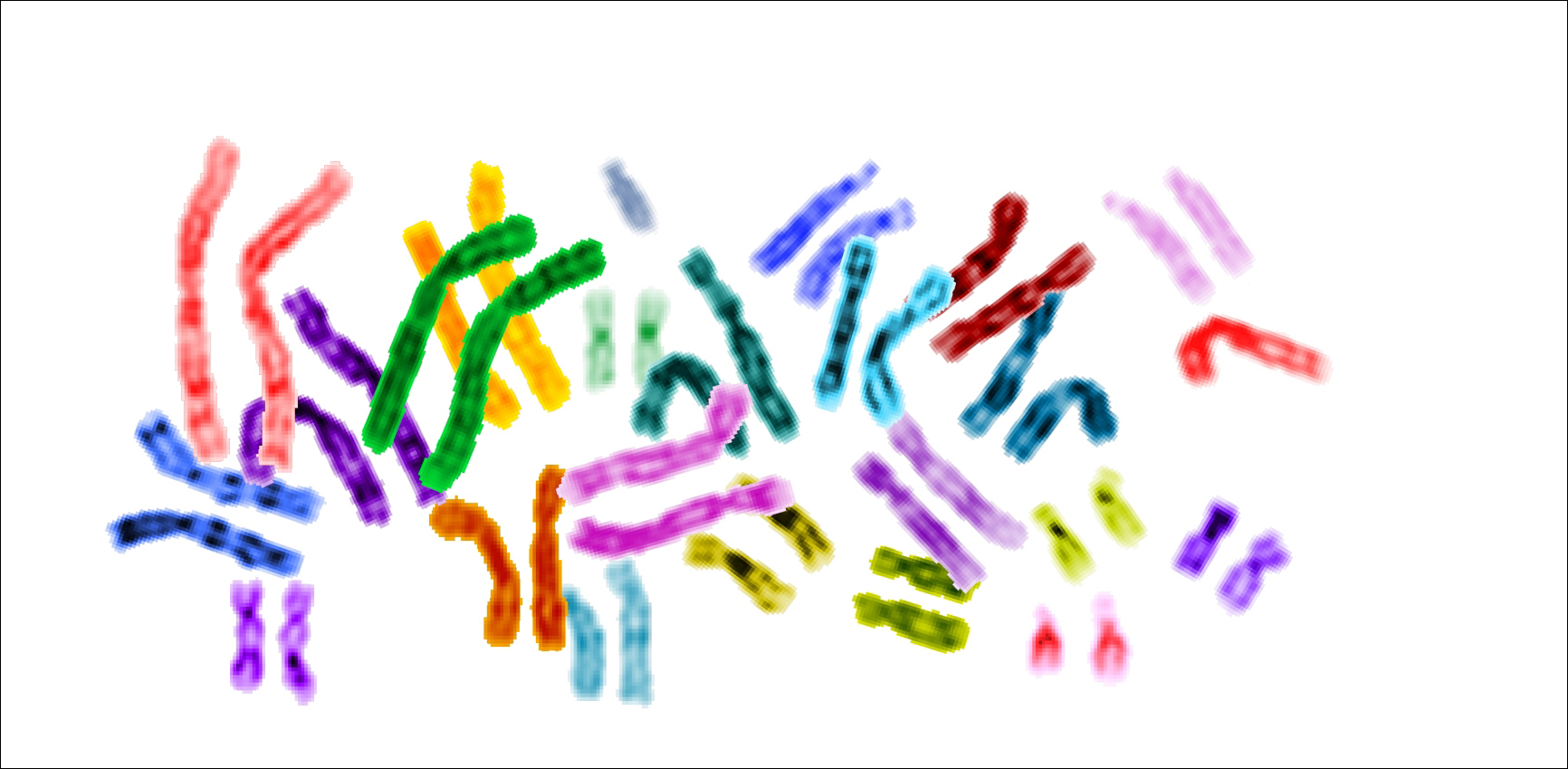 Photo of several chromosomes all dyed different colors