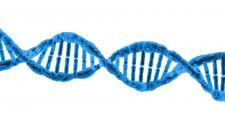 A strand of DNA, in blue.