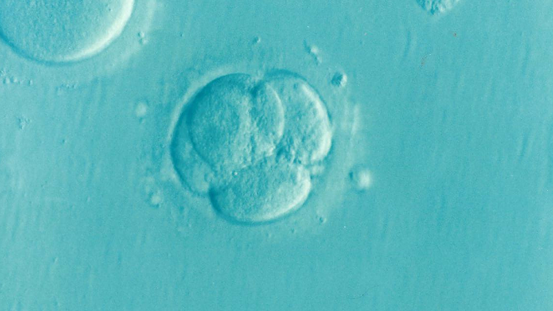 Human embryo on blue background
