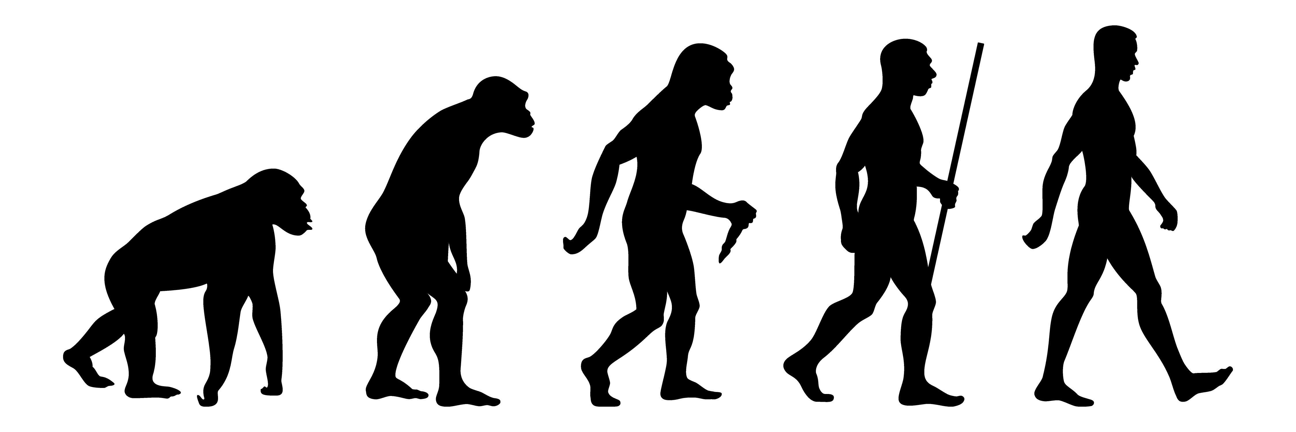 Black and white depiction of evolution, from primates to humans