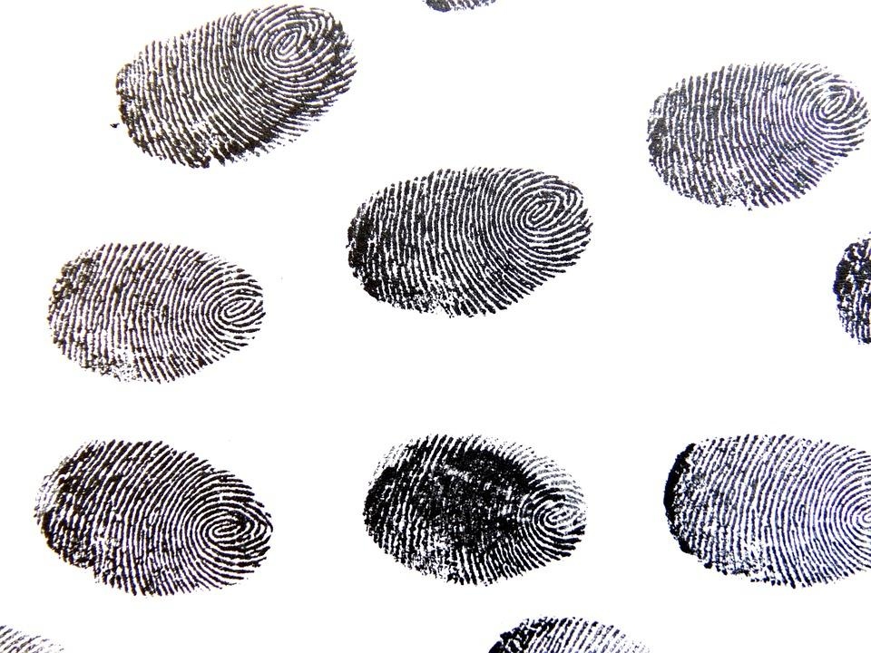 Several fingerprints stamped on a white background