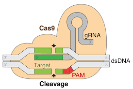 Image of CAS9