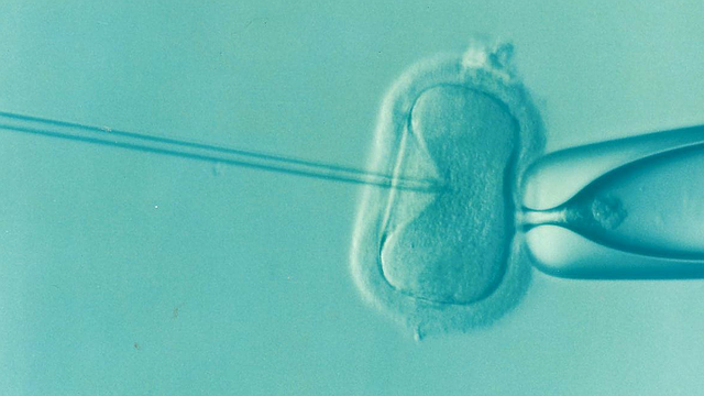 Microscopic image of sperm is injected directly into an egg