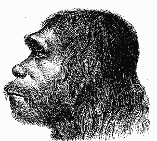 Black and white engraving of a neanderthal profile.