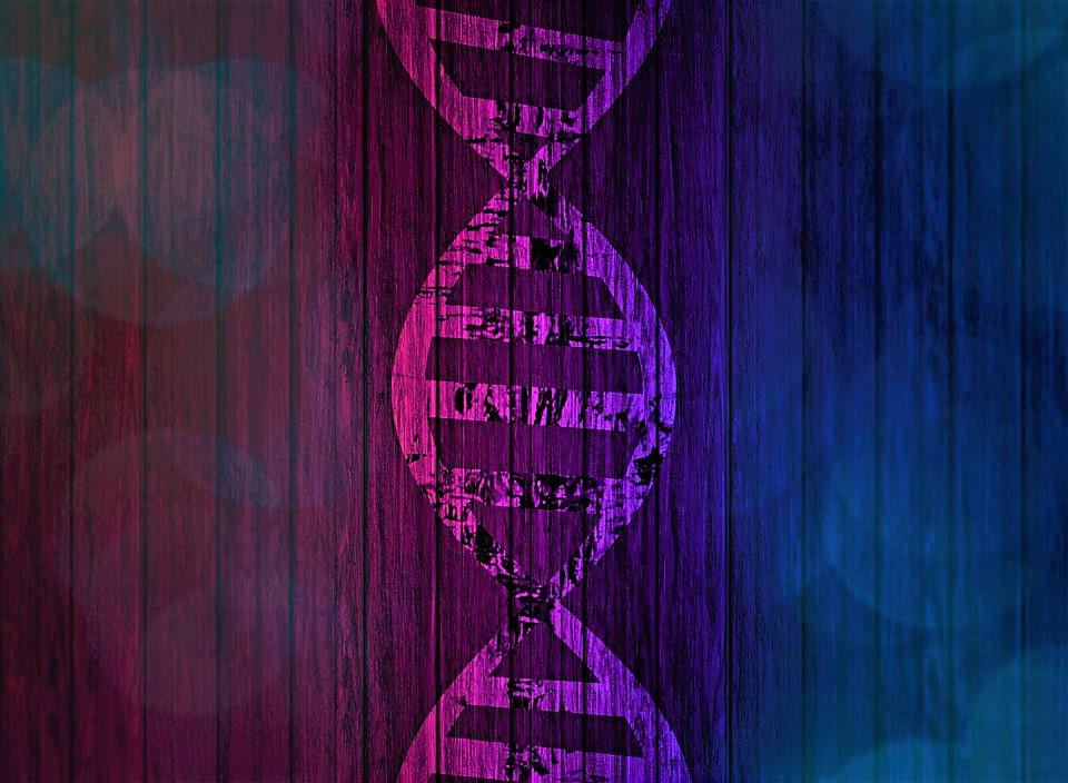 Pink background one side and blue background on the other with a DNA strand in the middle