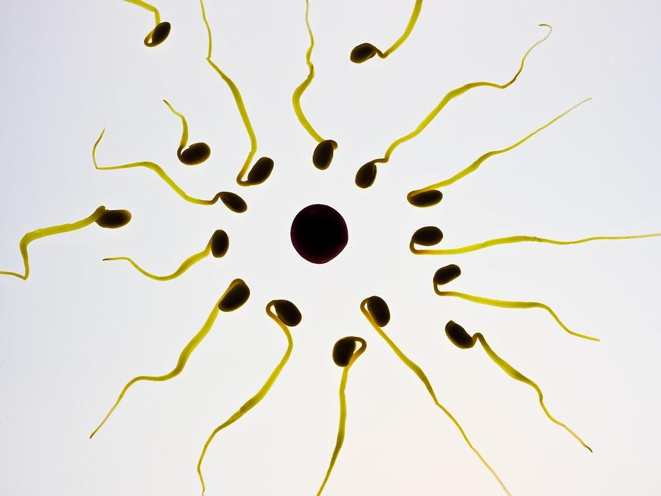human sperm surrounding an ovum