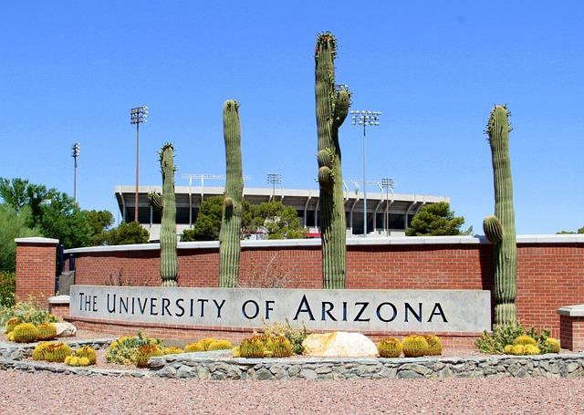 "A row of tall cactuses behind a sign reading ""University of Arizona"""