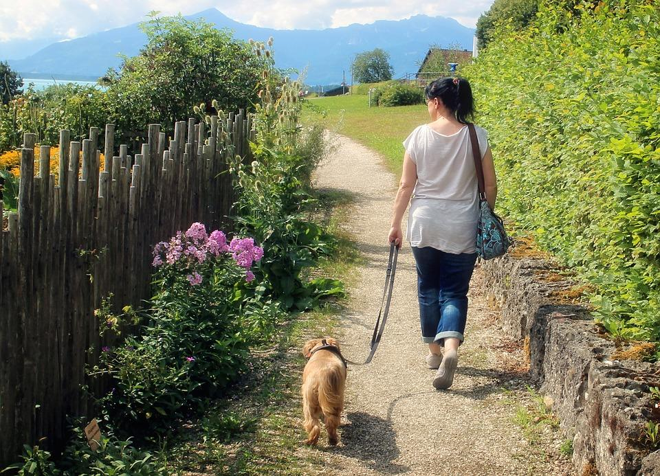 A women with black hair in a white tshirt and jeans is walking through a path with greenery on each side holding  lease with a small golden coated dog on the end of it.